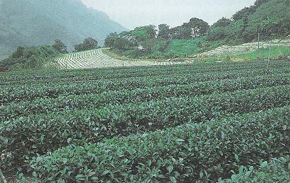 Teegarten Familie Wu