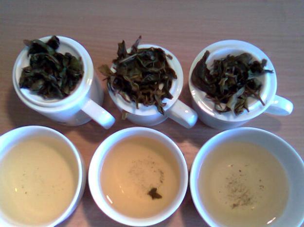 Degustation von Jade Oolong (Cui Yu Wulong)