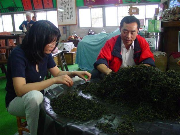 Jianzhi 檢枝 ein wichtiger Schritt für die Herstellung Oolongs