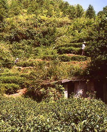 Anhui Teegarten