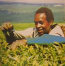Tee in Afrika