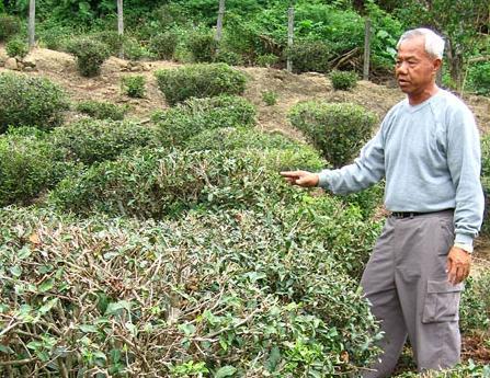 Teebauer Zhu