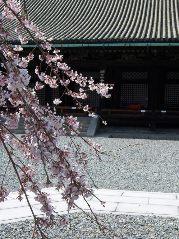 Hanami - Blumen bewundern