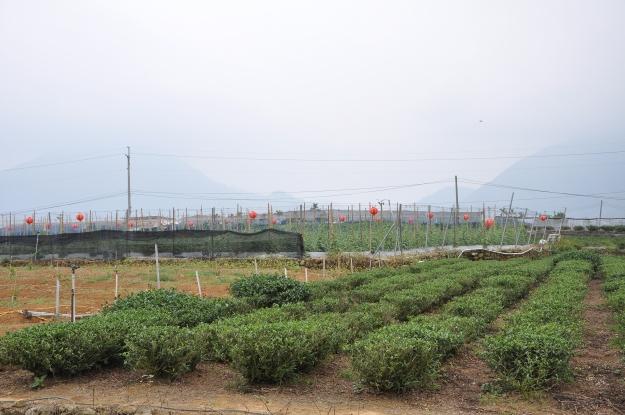 Donding gemüse Garten