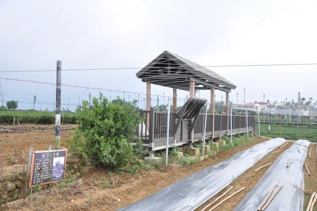 Dongding Gemüse, Tee und 100jähriger Busch-2